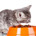 Sai quali sono gli oggetti indispensabili per il gatto? Scopri se l'ambiente è adatto al tuo gatto