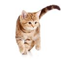 Scopri se il tuo gatto è stressato.