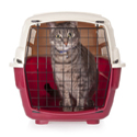 Viaggi e traslochi sono fonte di forte stress per il gatto. Scopri se il tuo gatto soffre per i cambiamenti che riguardano il suo ambiente.